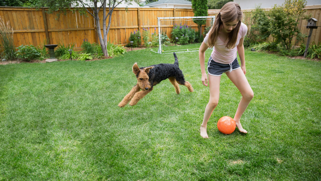 Child in backyard with a dog playing soccer - Sanford fit