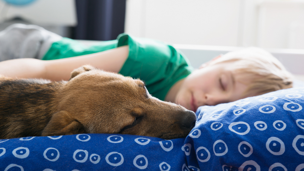 Child sleeping in bed with a dog - Sanford fit